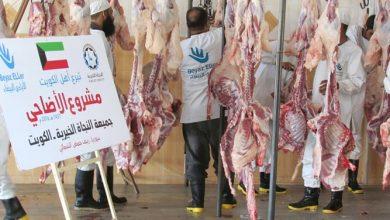 Photo of أضاحي الكويت في الكويت | جريدة الأنباء
