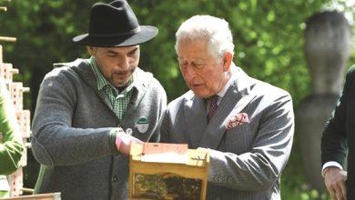 Photo of عسل ولي عهد بريطانيا بـ 25 جنيها | جريدة الأنباء