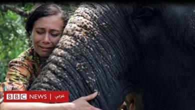 "Photo of اليوم العالمي للفيل: مخرجة هندية تتصدى لاستغلال الفيلة بـ""اسم الدين"""