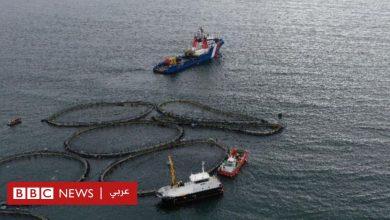 Photo of هروب 50 ألف سمكة سالمون من مزرعة في اسكتلندا بسبب عاصفة