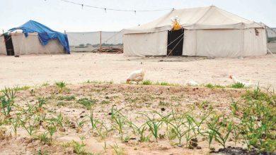Photo of بالفيديو المخيمات الربيعية سمر   جريدة الأنباء