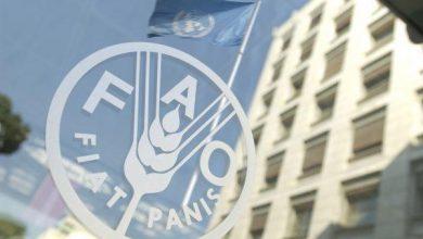 Photo of «فاو»: أسعار الغذاء ترتفع للشهر الثالث على التوالي