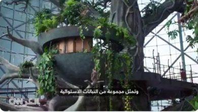 Photo of دبي تجربة غير مألوفة للتخييم وسط غابة استوائية تحتضن آلاف كائن..
