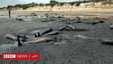 Photo of ما سر نفوق عشرات الدلافين قبالة سواحل موزمبيق؟