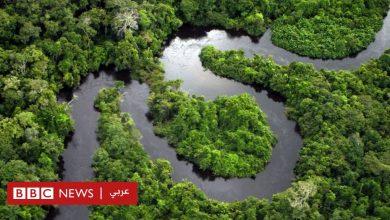 """Photo of بيع أجزاء من غابات الأمازون المطيرة """"رئة الأرض"""" بطريقة غير قانونية عبر فيسبوك"""