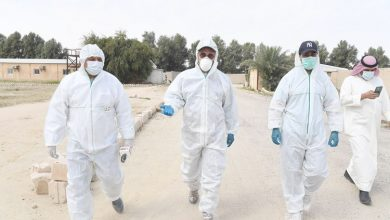 Photo of بالفيديو اليوسف إعدام الدجاج المصاب   جريدة الأنباء