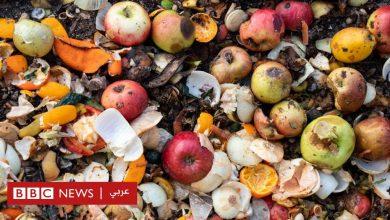 Photo of 900 مليون طن من الطعام ترمى في النفايات سنويا