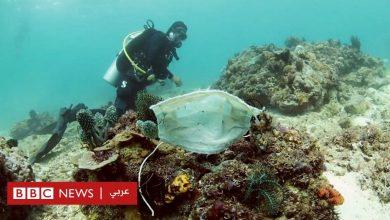 Photo of فيروس كورونا: أقنعة واقية عالقة بالشعاب المرجانية تهدد الحياة البحرية في الفلبين