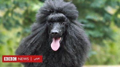"Photo of كلب يقود الشرطة إلى القبض على صاحبته الألمانية بعد عام من ""وفاتها"""