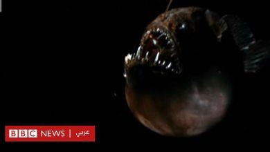Photo of ظهور سمكة كروية مخيفة على شواطئ كاليفورنيا