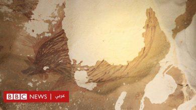 Photo of التغير المناخي يدمر أقدم لوحة لحيوان في العالم