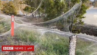 Photo of سجادة من خيوط العناكب تغطي مساحات واسعة في أستراليا