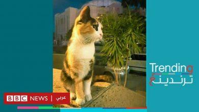 "Photo of تسميم ""قطة المهرجان"" وأولادها يثير غضبا على مواقع التواصل في مصر"