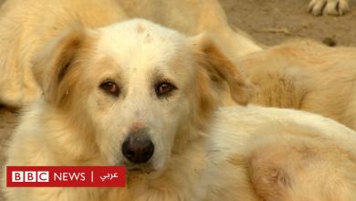 Photo of الكلاب الضالة: مبادرات شعبية لحمايتها في مصر