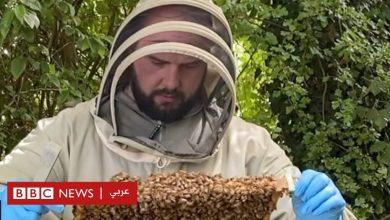 Photo of قصة نجاح شاب من شركة صغيرة لبيع العسل إلى صاحب ملايين الدولارات